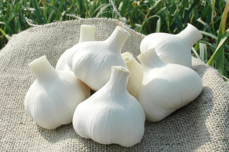 こだわり栽培 まほろば大蒜(にんにく) 厳選大玉 商品一覧【福地ホワイト6片種】
