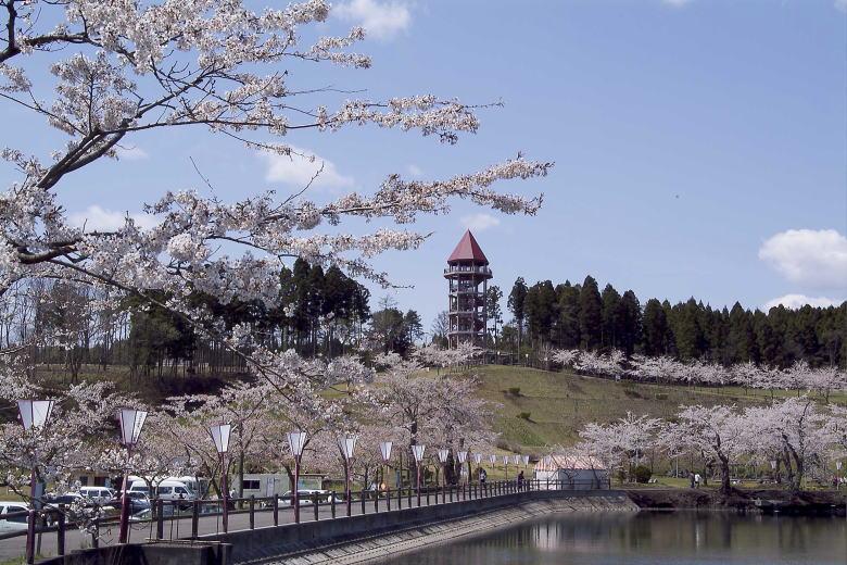 さくら (サクラ、桜、櫻) - お...